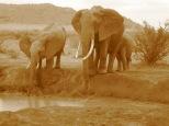 Tsavo National Park, Kenya, 2012 D.Gies